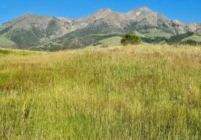 Six Mile Ranch